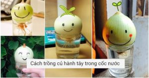 Cach trong cu hanh tay trong coc nuoc